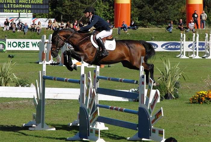 Верховые породы лошадей: голштинская, ольденбургская, голландская теплокровная и вестфальская