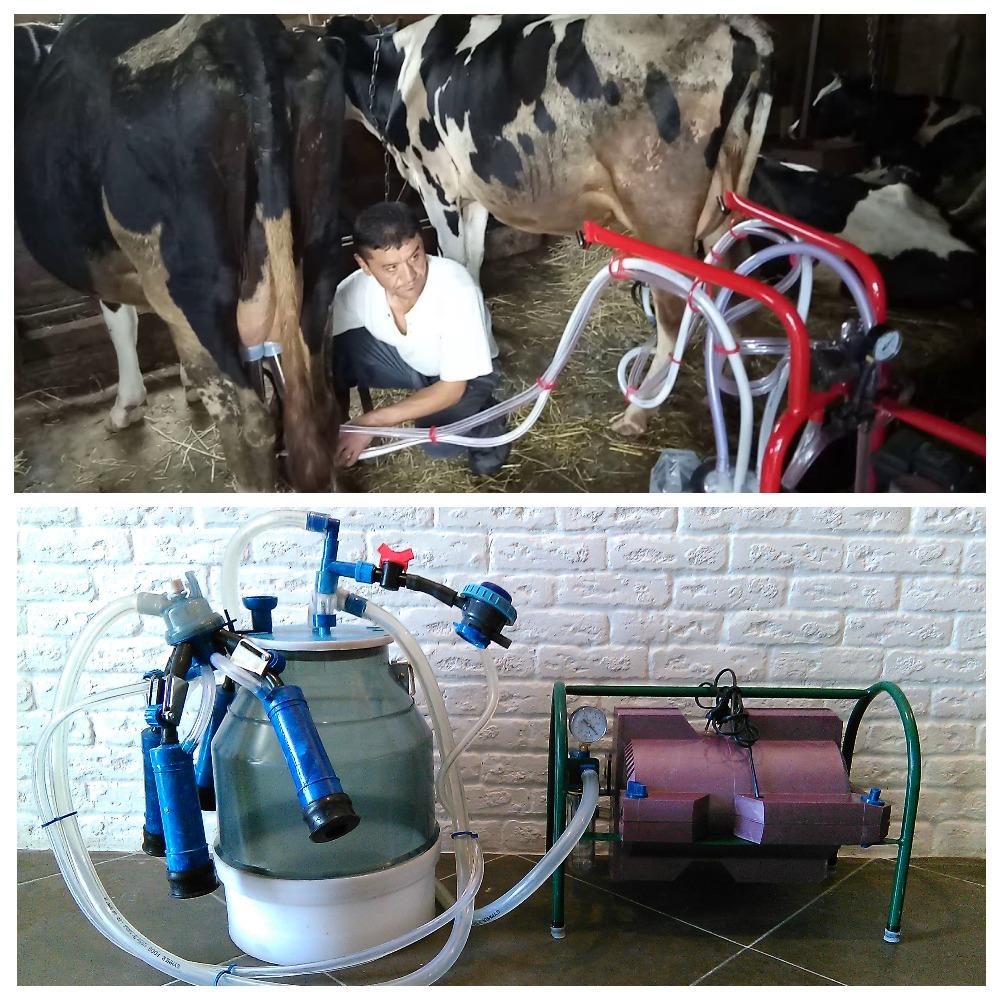 Как доить корову: машинный и ручной надой, составление графика