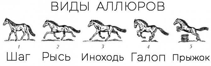 Способ бега лошади
