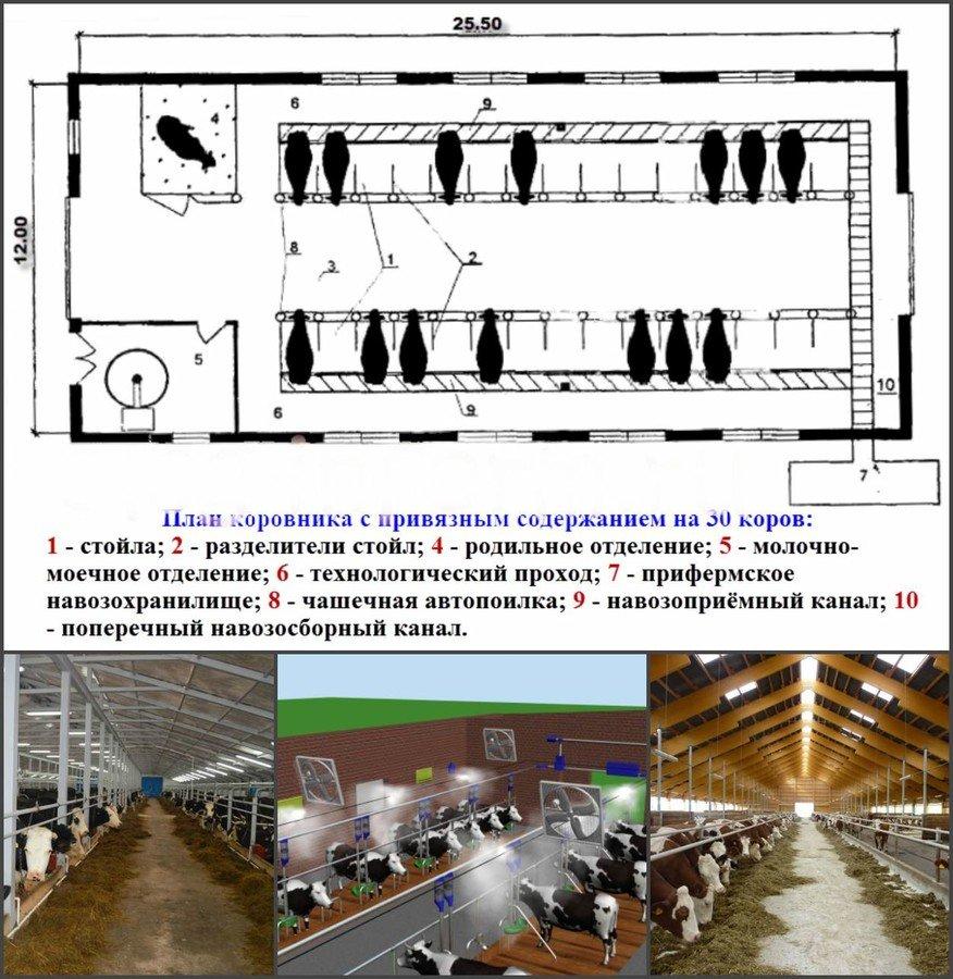 ᐉ оборудование для коровника на 10 голов: ферма на 10 коров - zooshop-76.ru