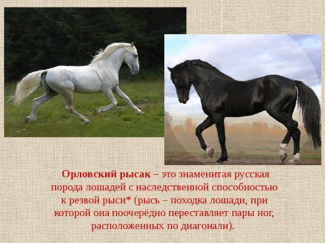 Русская рысистая и русская верховая – знакомство с красивыми спортивными лошадьми |