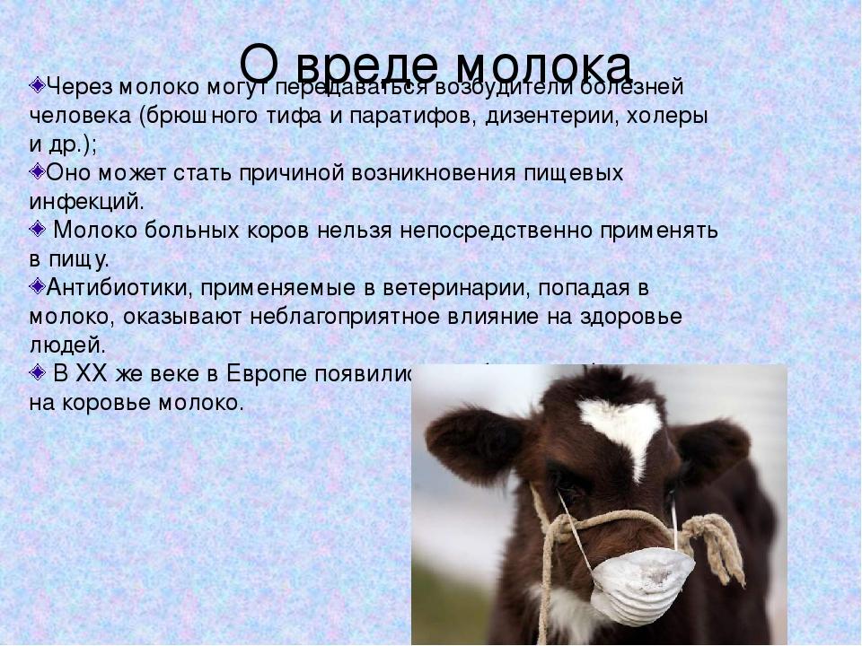 Информация о коровьем молоке: почему молоко пахнет коровой, можно ли пить парное |