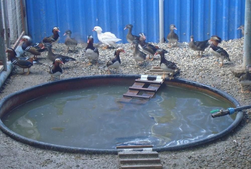 Обустройство водоема — домик для уток на воде