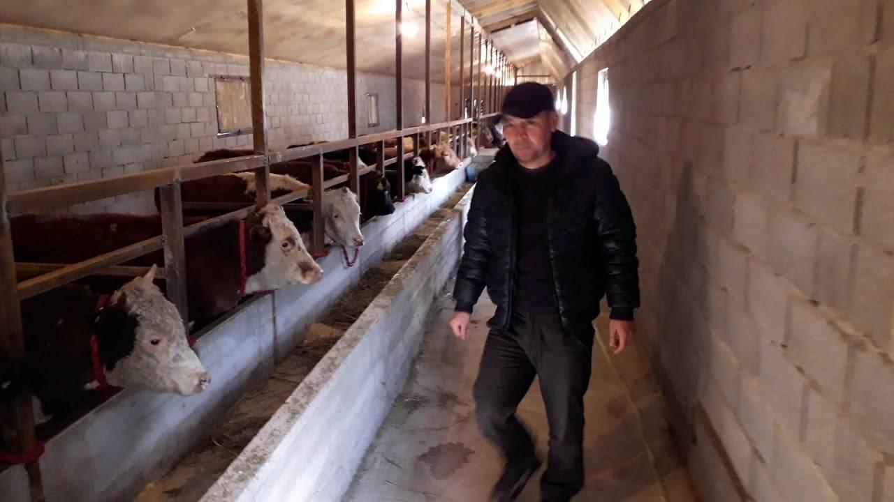 Как построить сарай для быков своими руками