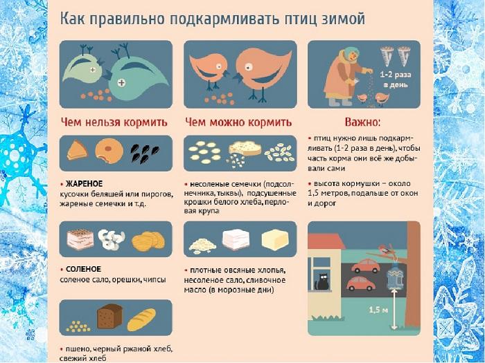 Чем и как правильно кормить уток?