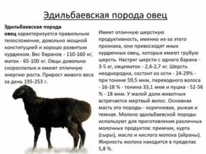 Овцы романовской породы содержание и уход, фото романовских овец