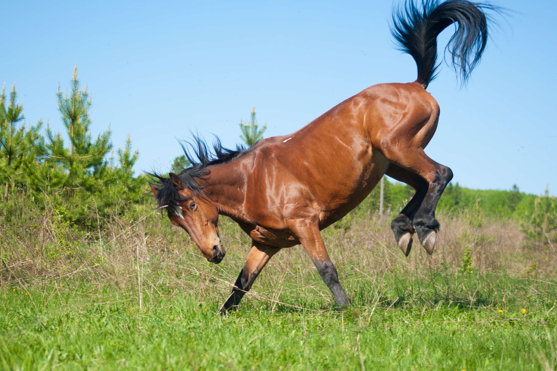 """Как сесть на лошадь и как слезть с лошади в """"майнкрафте"""": особенности приручения"""