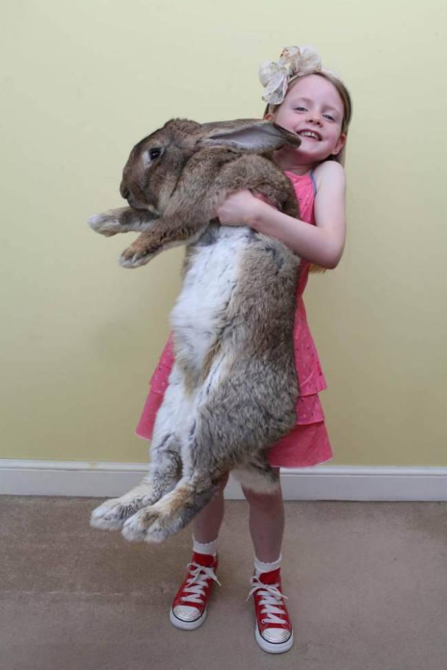Самые большие кролики в мире: породы и рекордсмены, занесенные в книгу гиннеса