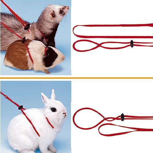 Шлейка — незаменимый аксессуар для прогулки кролика