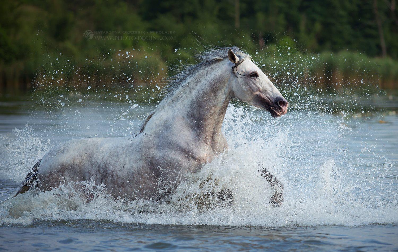 Почему лошадь нельзя поить сразу после скачки? описание, фото и видео