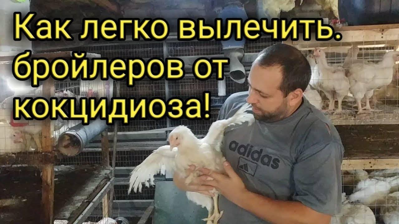 «метронидазол»: инструкция по применению для птицы
