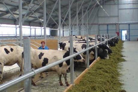 Как построить ферму на 100 коз: бизнес-план, проект, схемы, чертежи, устройство