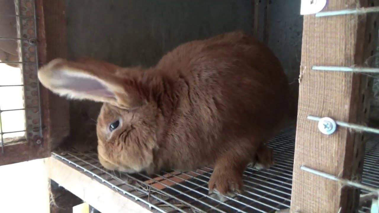 Кролики и куры: возможно ли содержать их вместе, особенности содержания - naz74.ru