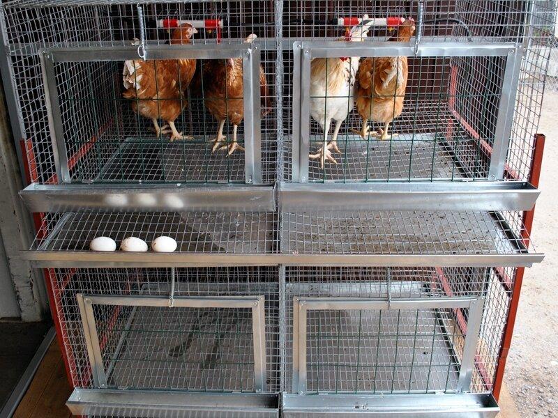 Клетки для кур несушек своими руками: чертежи с размерами, фото содержания птиц