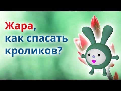 Можно ли кролику давать кабачок: в чем польза и вред, в каком виде скармливать