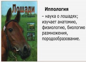 Что изучает наука о лошадях иппология, её основные направления, лечение болезней иппотерапией