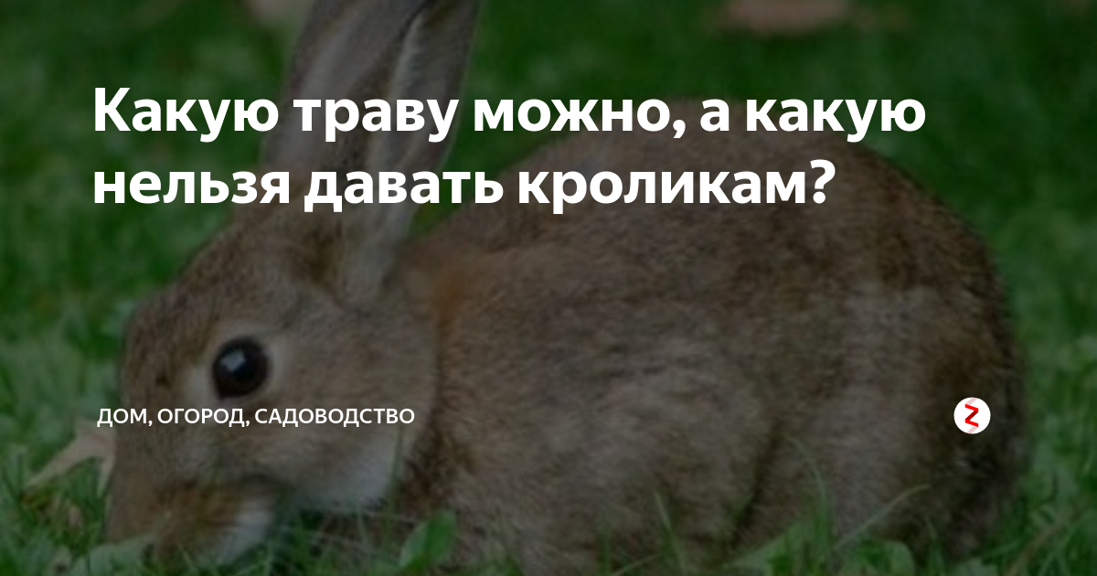 Какую траву в корм кроликам давать можно и нельзя в свежем виде