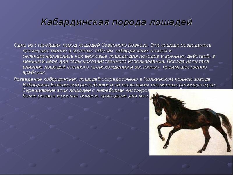Кабардинская лошадь: особенности породы и уход — cельхозпортал