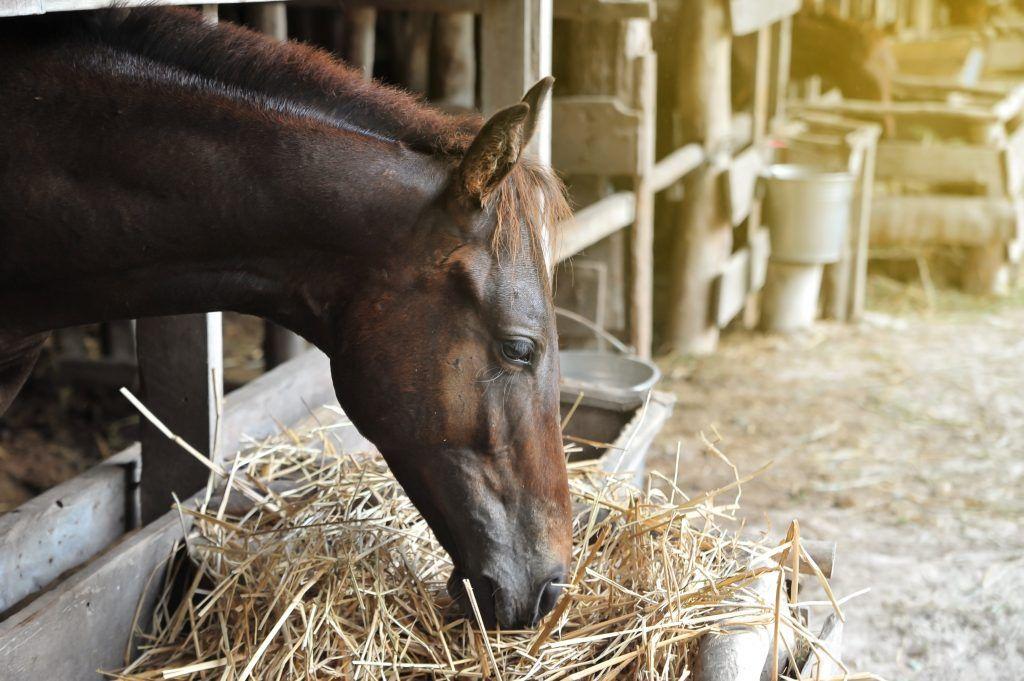Чем и как правильно кормить лошадей