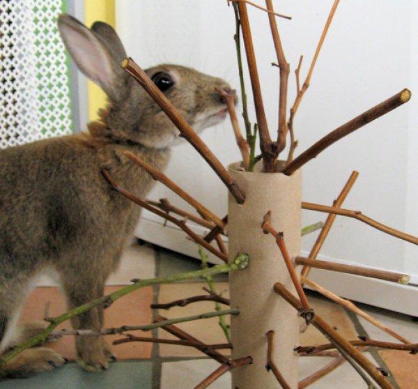 Ветки каких деревьев можно давать кроликам? | мир кролика
