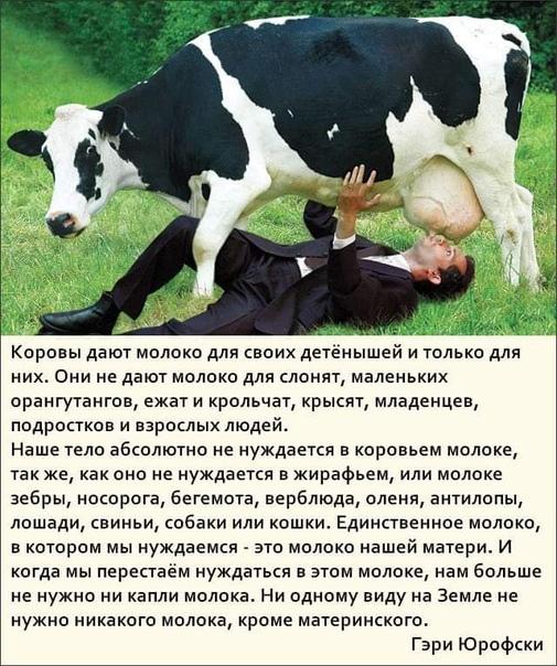 Почему корова дает мало молока и что делать