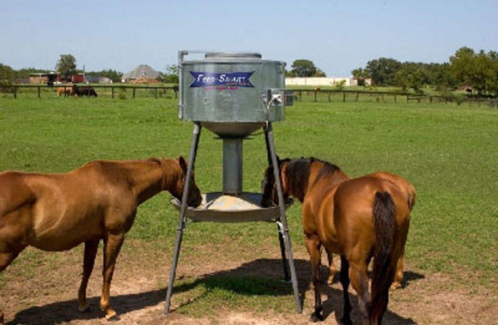 Что едят лошади: как правильно кормить коней, составление суточного рациона