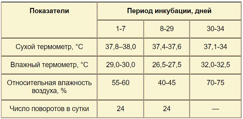 Все о режиме инкубации яиц мускусных уток: таблица, температура, правила