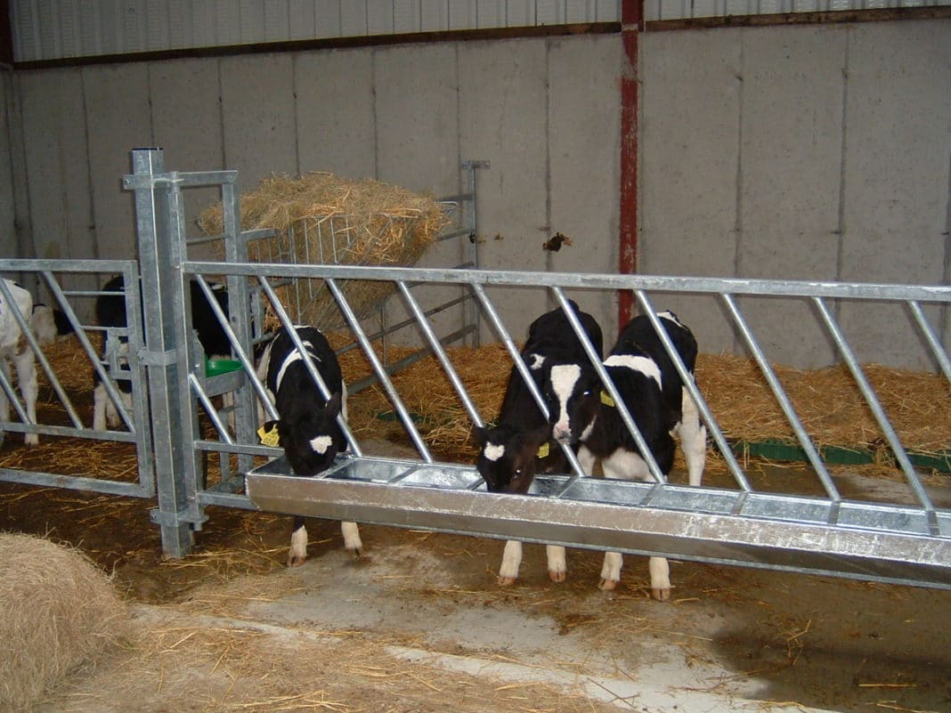 Стойло для коровы: размеры для быков, как сделать коровник своими руками, как привязать, помещение в домашних условиях