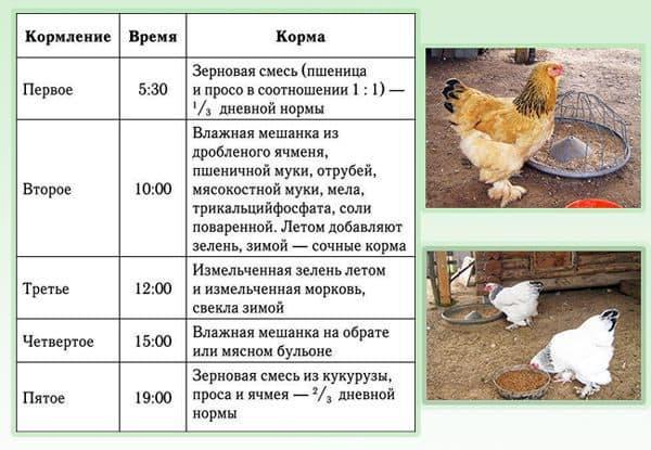 Сколько может весить куриное яйцо, один белок или желток без скорлупы, вес в граммах