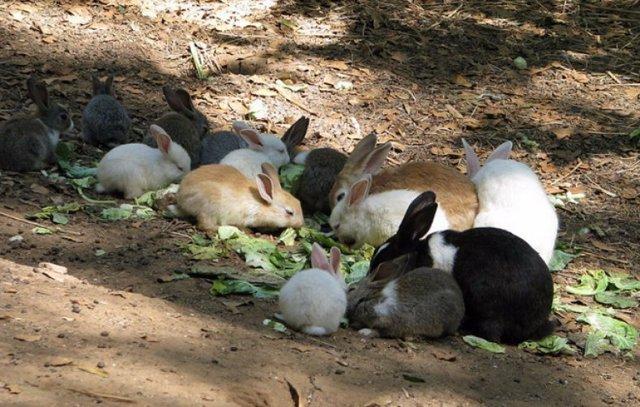 ✅ можно ли кролику давать крапиву: как правильно добавить в рацион, польза и вред - tehnomir32.ru