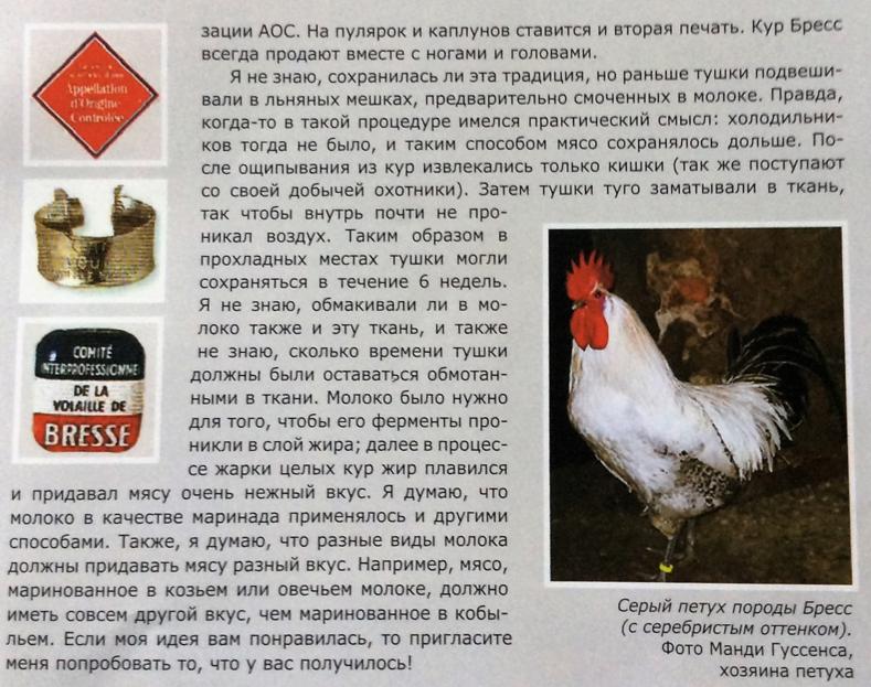 Бресс гальская порода кур — обзор птиц из франции