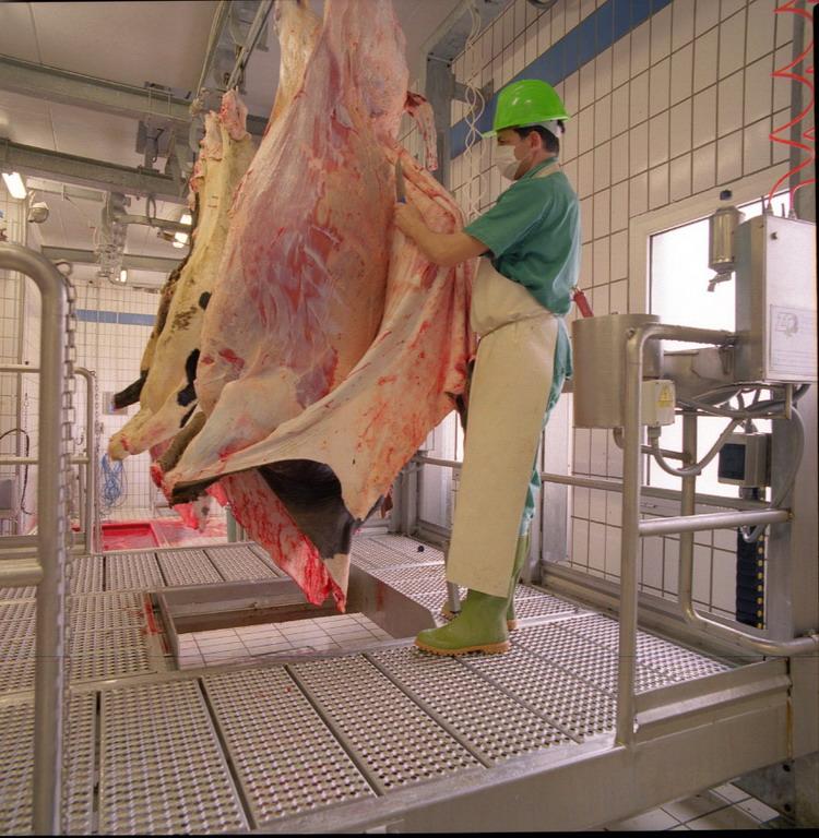 Как забивают коров на бойне
