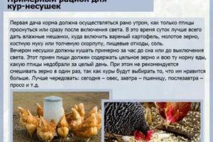 Как и чем кормить кур-несушек чтобы они хорошо неслись - частные заметки