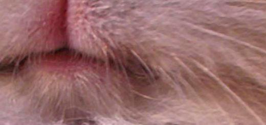 Профилактика и лечение инфекционного стоматита