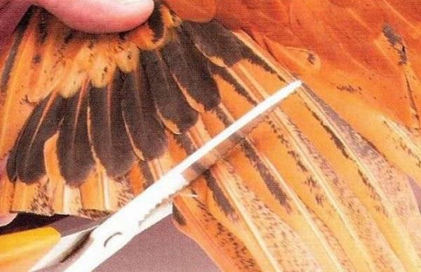 Как обрезать крылья у кур | своими руками - как сделать самому - строитель