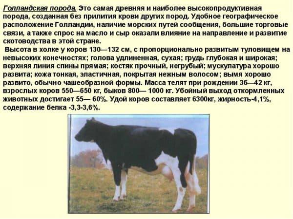 Сравнительная таблица по породам крс