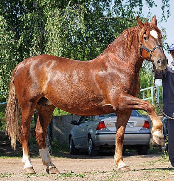 Битюги — лошади из русских сказок