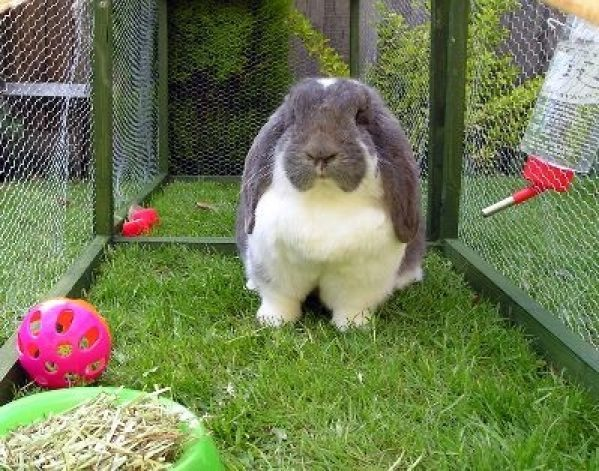 Почему кролик топает задними лапами