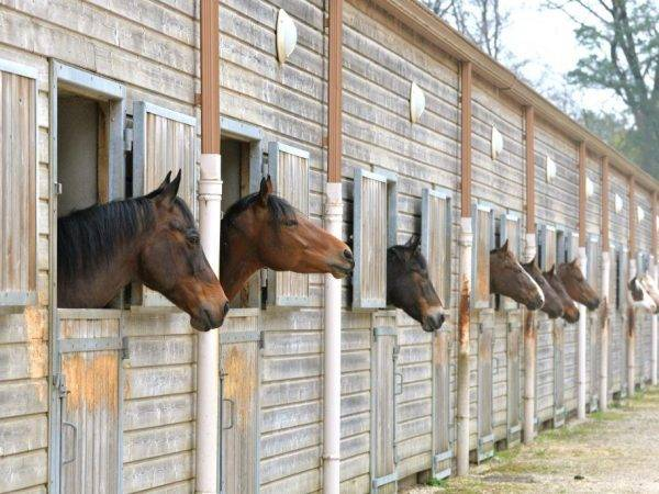 Как сделать загон для лошадей: форма, материал, грунт, освищение, фото