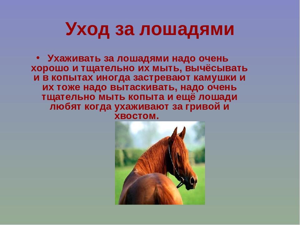 Разведение лошадей, уход и содержание в домашних условиях