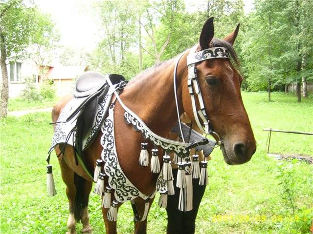 Седло для лошади: строение, виды, подбор, изготовление своими руками