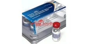 Чума свиней: вакцина, инструкция по применению, противопоказания и побочные эффекты