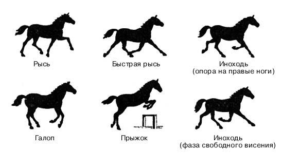 Способы и виды бега лошади: обзор, описание и фото