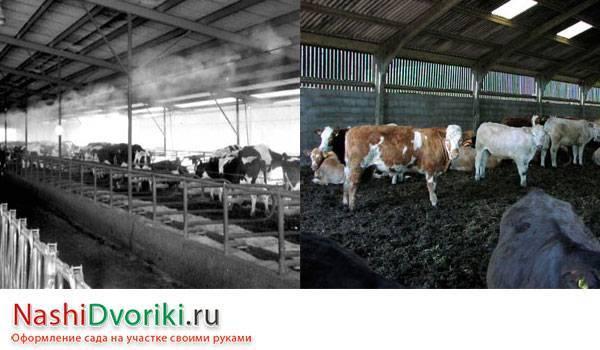 Обоснование планировочных решений молочной фермы на 208 коров. дипломная (вкр). сельское хозяйство. 2011-12-22