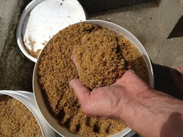 Как прорастить пшеницу для кур-несушек