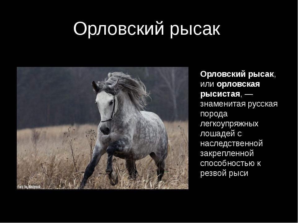Браво, воронеж! виват, россия! » » воронежский край – родина орловского рысака и русской верховой лошади