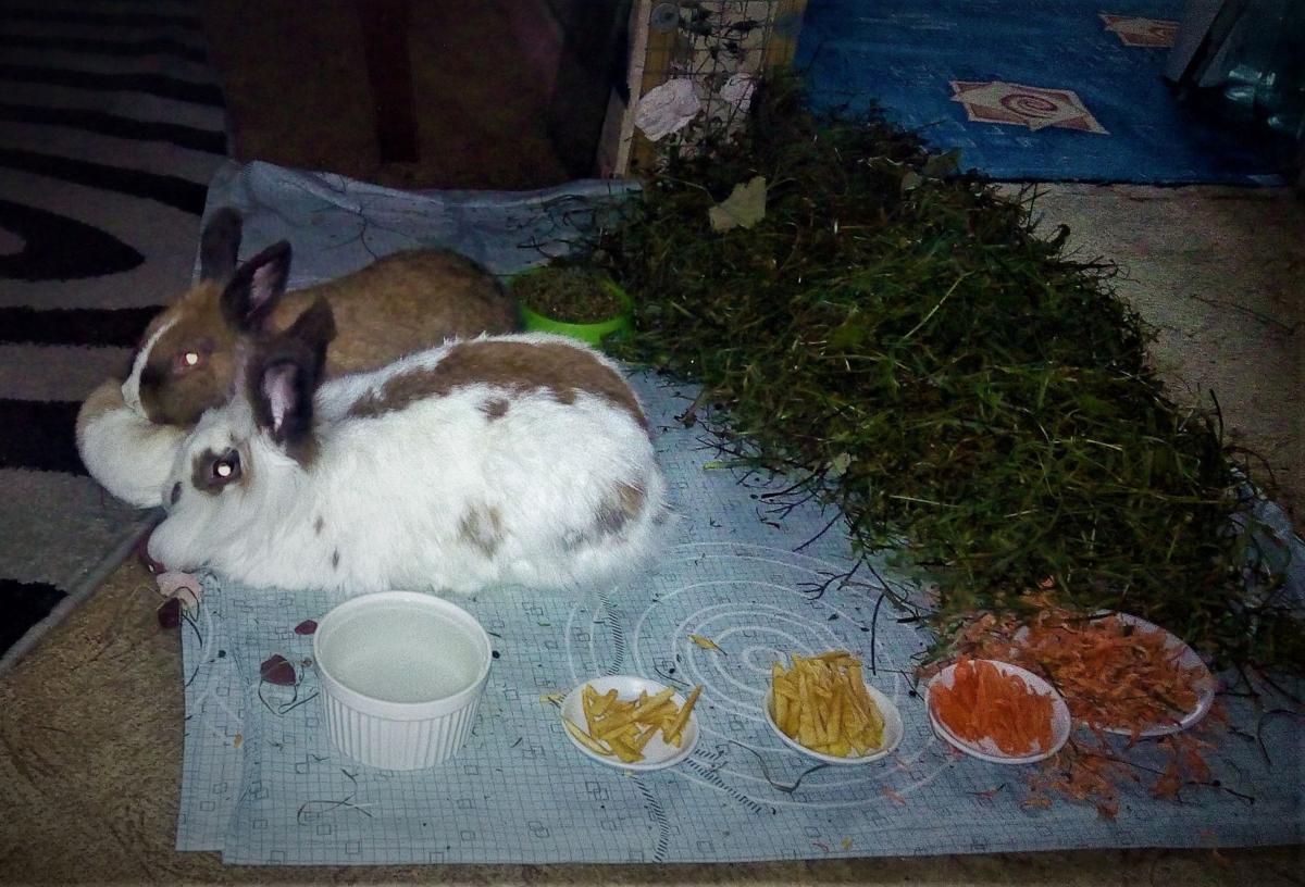 Кормление кроликов - лучшие методы и советы для начинающих (85 фото)