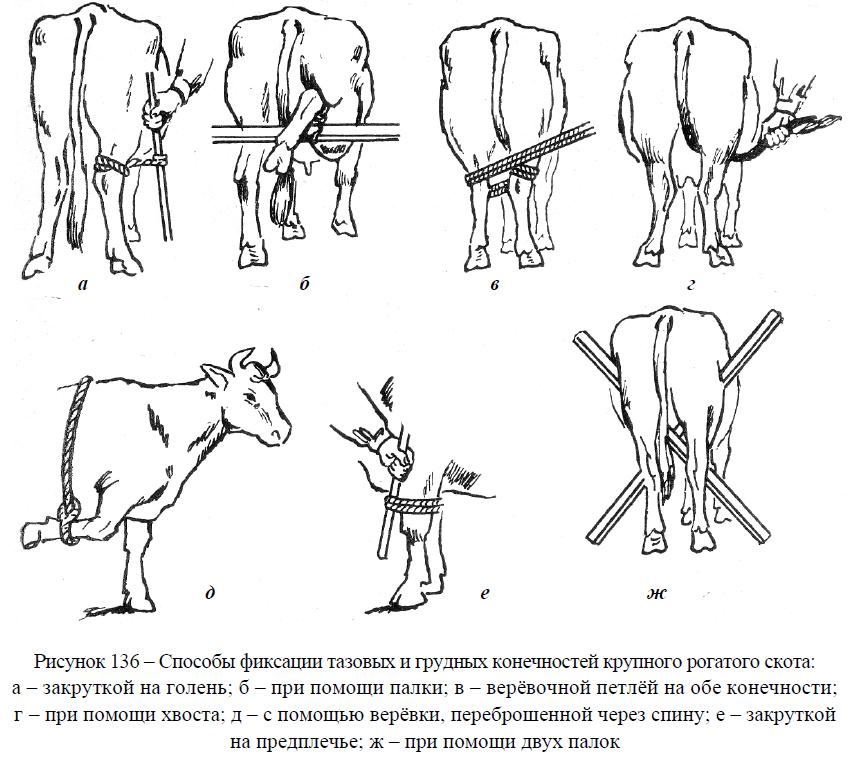 Спаривание коров