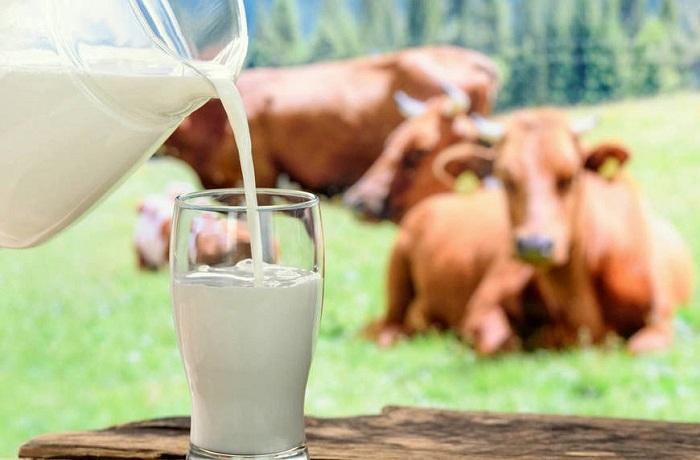 Молоко с ароматом коровы - страна мам
