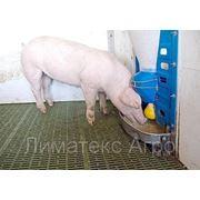 Автоматические кормовые системы для крс (кормовые центры)